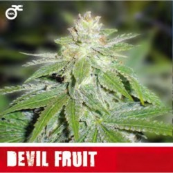 Devil Fruit